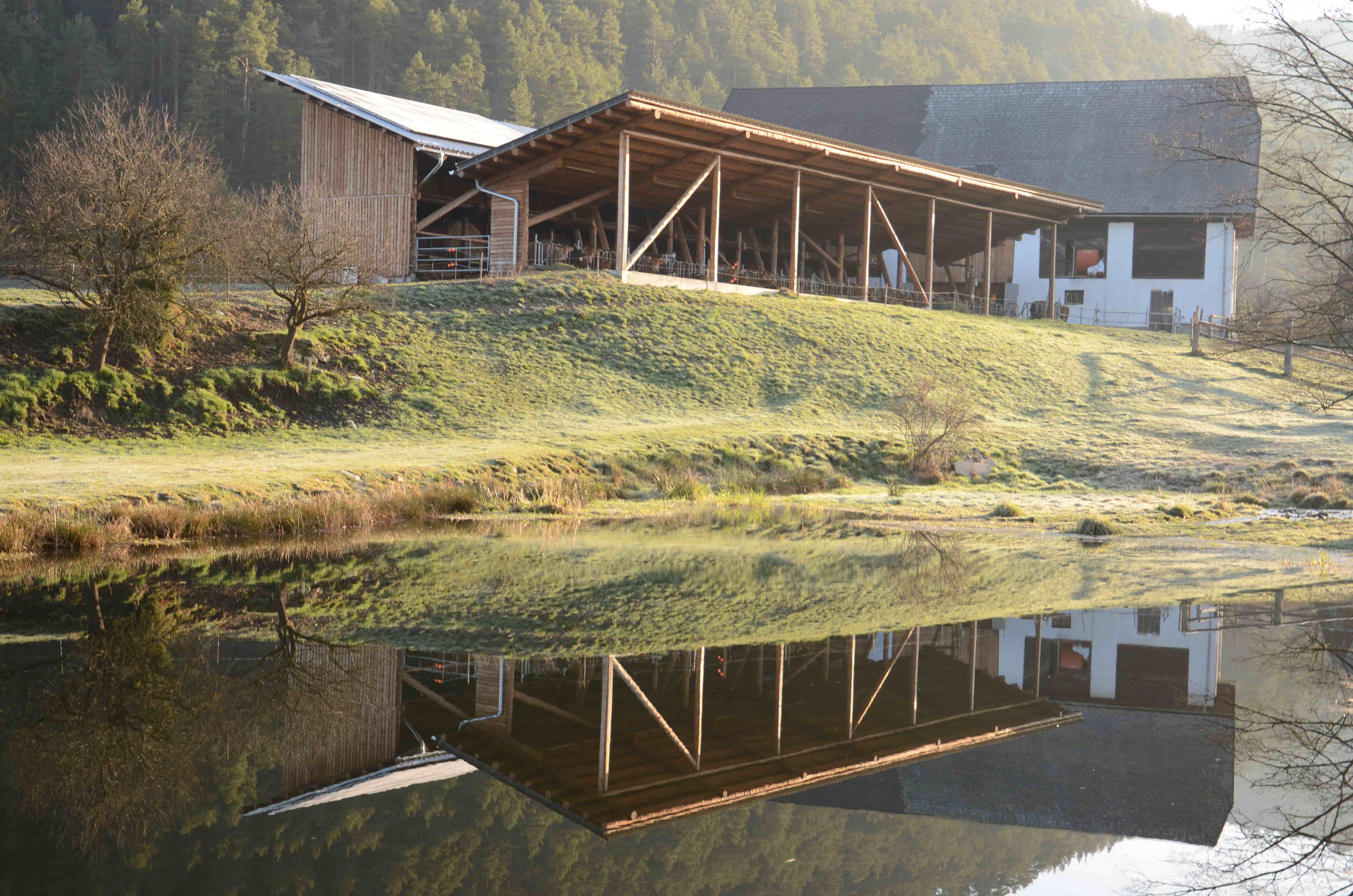 Teich mit Stallblick - oder eben umgekehrt